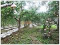 陕西省洛川县300亩养殖基地招商