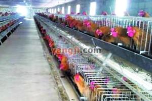 贵州荔波建成百万羽瑶山鸡种鸡场