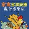 家禽多种病原混合感染症-养鸡技术