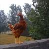 现代兴旺禽业60日龄青年鸡的5大优势
