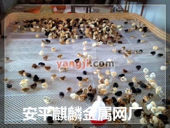 安平麒麟金属网厂