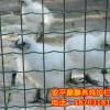 圈大公鸡的铁丝网围栏