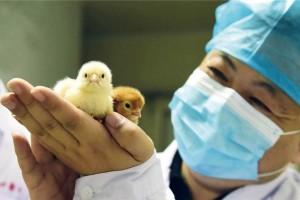 """世界最大的雏鸡生产基地探访——""""鸡司令""""杜守山"""