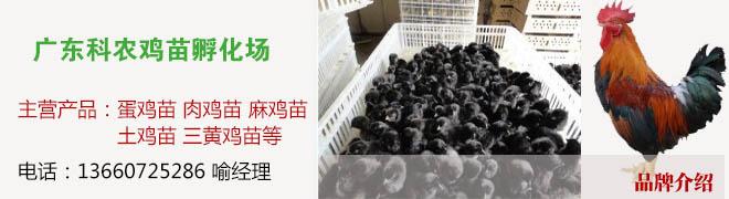 广东科农鸡苗孵化场