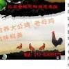 发酵床养鸡的优势有哪些