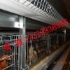 供蛋鸡笼 肉鸡笼 育雏笼 自动化养殖设备