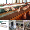种鸡自动产蛋箱-提供欧式、美式自动产蛋箱