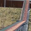 德国鲁冰中央集蛋系统