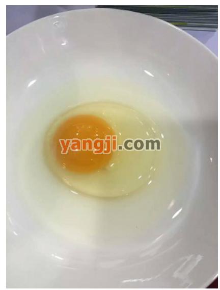 白领丽人进深山养鸡,极品鸡蛋畅销长三角