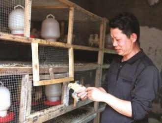 农户荒山养鸡,一年净赚30万