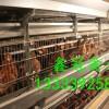 常年供应60-110日龄青年鸡,海兰褐,海兰灰