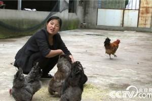 徐晓兰:为找回父亲的自信去养鸡