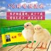 肽恩贝5%微生态雏鸡饲料提高免疫力存活率降低死亡率