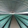 养鸡设备|鸡笼报价