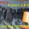 三峡黑鸡苗长期供应,包成活