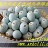 草原绿壳鸡蛋-绿壳鸡蛋-土鸡蛋批发/报价-湖北华绿禽业