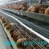 鹤壁鸿盛禽业出售青年鸡