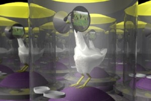 科学家计划尝试为养鸡场中的鸡设计VR场景 ()