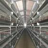 鸡笼、全自动养鸡设备、智能化养鸡设备、蛋鸡养殖设备、蛋鸡设备