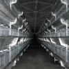 山东省无棣鲁兴养殖设备立体式肉鸡笼