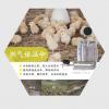 养殖育雏伞采暖取暖器燃气育雏器燃气红外辐射系列