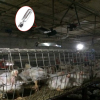 燃气养殖育雏采暖器育雏伞取暖器养殖采暖器