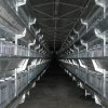 山东省无棣鲁兴专业养殖设备立体式肉鸡笼