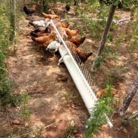 鸡用自动饮水器