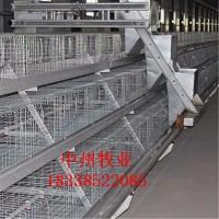 批发阶梯式蛋鸡笼三层四层A式鸡笼全自动清粪机设备