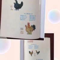 常年销售鸡苗(江山草鸡、花凤鸡、绿壳蛋鸡、黑鸡等)