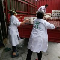 坛同哪里有优质红羽土鸡苗供应 养殖土鸡脱温苗市场前景好