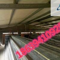 供应肉鸡笼、阶梯式肉鸡笼、河南鸡笼厂、鸡笼设备、肉鸡笼价格