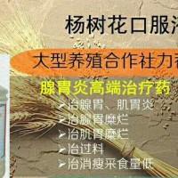 鸡腺胃炎杨树花口服液