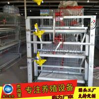 全自动肉鸡笼哪里买河北省衡水市安平县春亿笼具厂